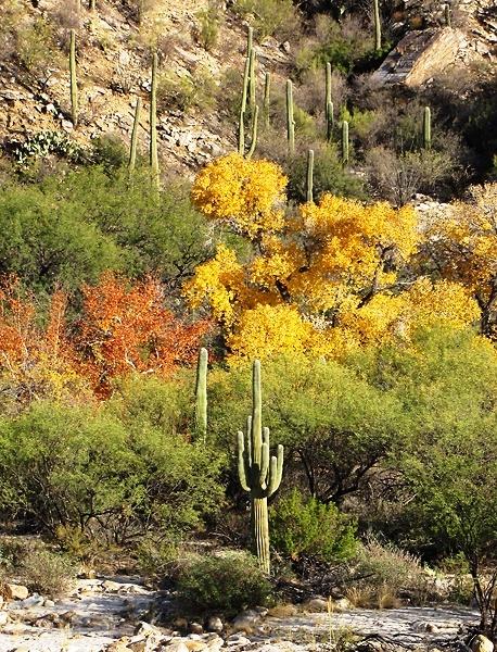 Sabino Canyon Tanque Verde, Tucson, #Arizona
