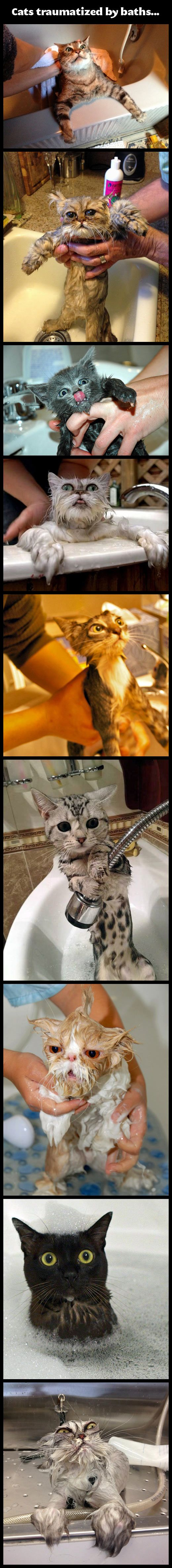 Cats traumatized by baths.