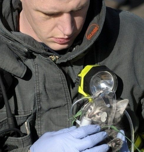 hero: Cats, This Man, Animal Rescue, Heroes, Faith In Human, Firefighters, Human Restoration, House, Kittens