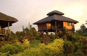 Arasha, Ecuador's Tropical Rainforest Resort & Spa