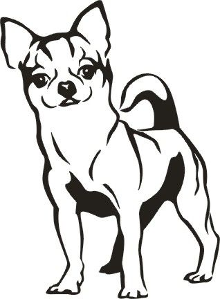 Chihuahua Show Your Love For Your Chihuahua With Our