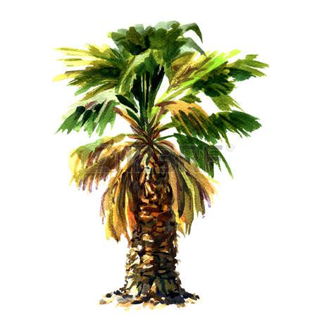 Green beautiful palm tree isolated watercolor painting on white background Stock Photo