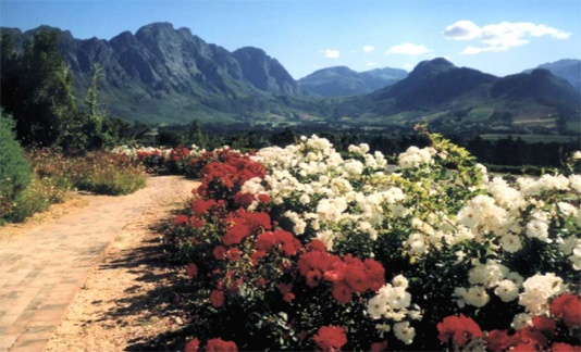 Franschoek wine route. South Africa