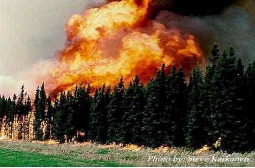 yellowstone fire - 1988