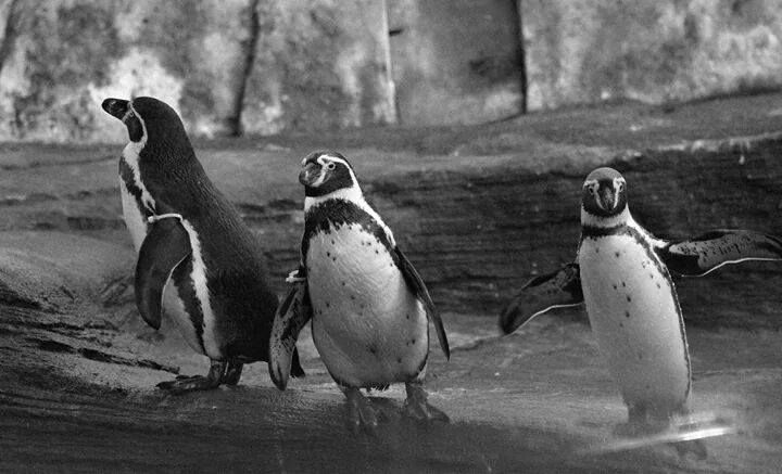 Take a look at these adorable penguin pals! Thanks for sharing your lovely photographs with us, Grace Case.