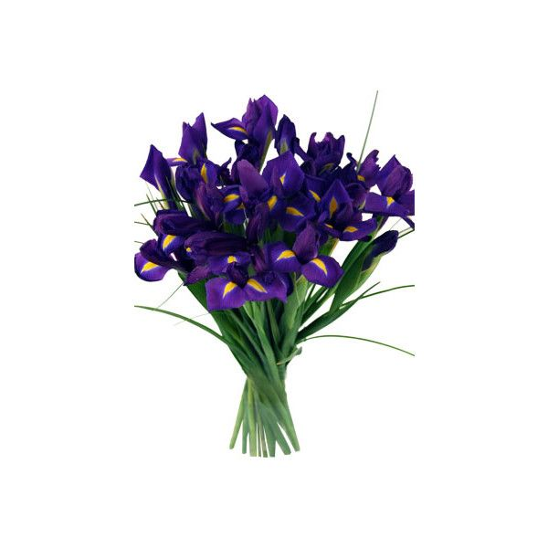 Blue Iris Flower Meaning Blue Iris Symbolizes Hope Faith Making It The Perfect Flower To Use In In 2020 Flower Meanings Iris Flowers Funeral Flower Arrangements