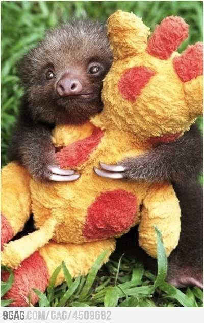 It's so cute, I wanna die.: Baby Sloth, Sloth Hugging, Animals, Sloths, So Cute, Babysloth, Baby Animal, Stuffed Giraffe