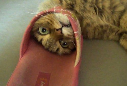 109 Best Animals Images On Pinterest: 17 Best Images About Cats Stuck In Things On Pinterest