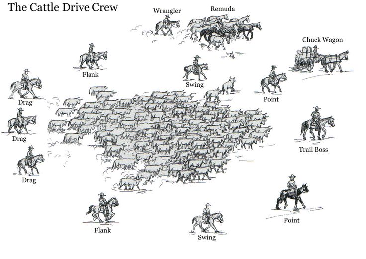 Positions on a cattle drive Google Search Settings