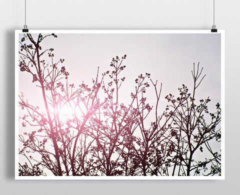 Pink Branches – Hipster Posters