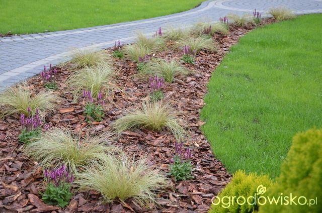 """Jak """"ożywić"""" mój szmaragdowy ogród - strona 237 - Forum ogrodnicze - Ogrodowisko"""
