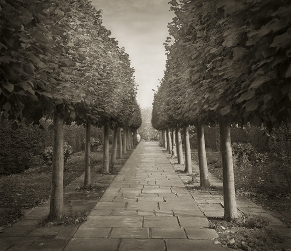 Lime Walk, Sissinghurst by Beth Dow