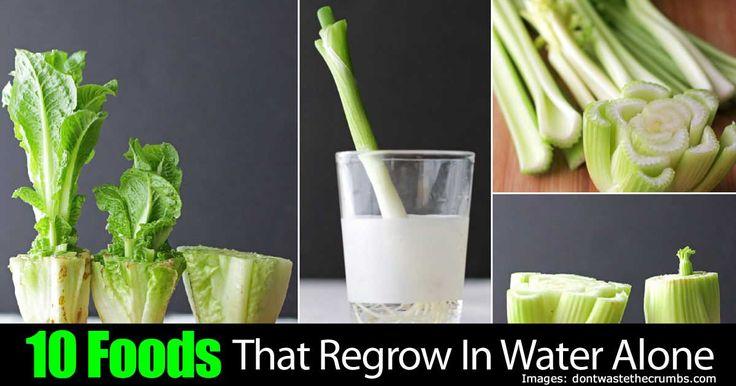 10-foods-regrow-water-63020151564