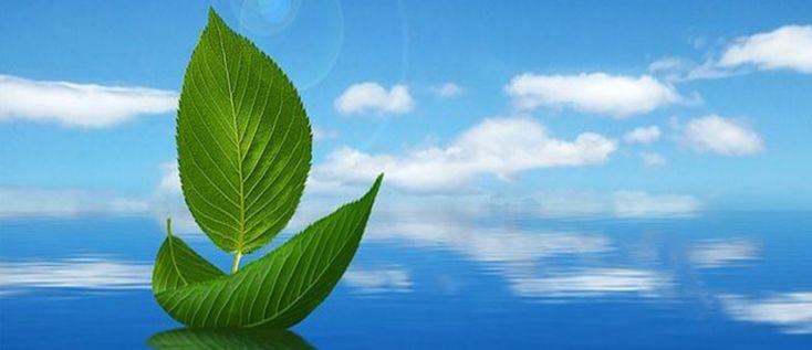 Περιβαλλοντική Εκπαίδευση