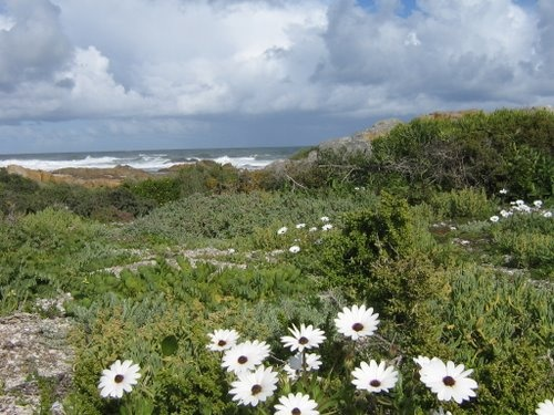 Spring Wild Flowers; West Coast South Africa