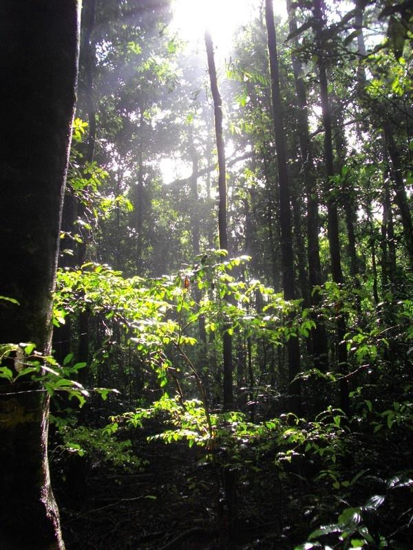 Glass Mountains rainforest park.