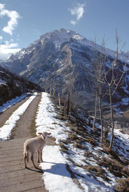 Paseando cerca de Arenas de Cabrales. Picos de Europa #Asturias