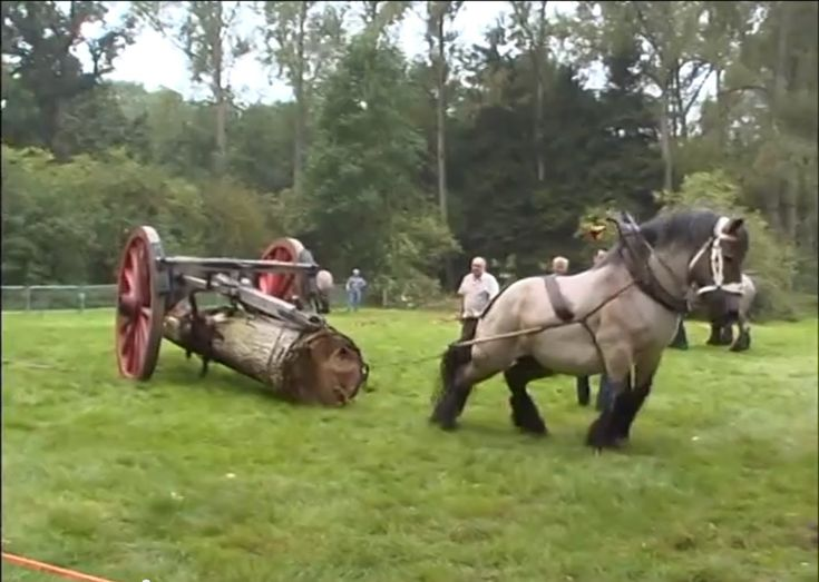 Petra : the strongest Belgian Draft Horse