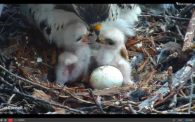 9 best images about bird cameras live on pinterest