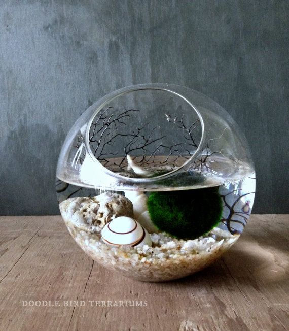 Moss Ball Orb / Aquarium Moss Bowl Biosphere Kit by DoodleBirdie