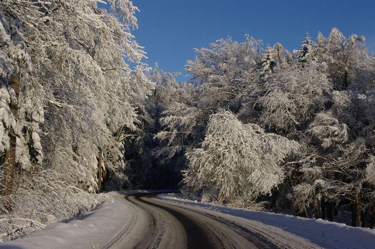 las zimą - Szukaj w Google