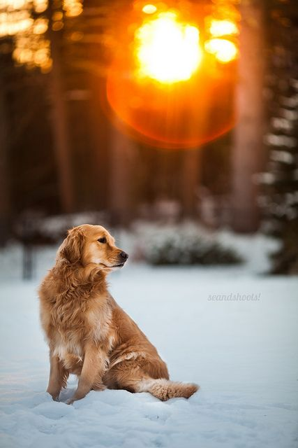 Makes me think of my sweet lost boy...and how he loved the snow.  My Charlie loved the snow too.