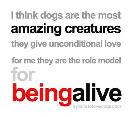 dogs are the most amazing creatures – Gilda Radner