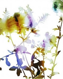 james welling - photography