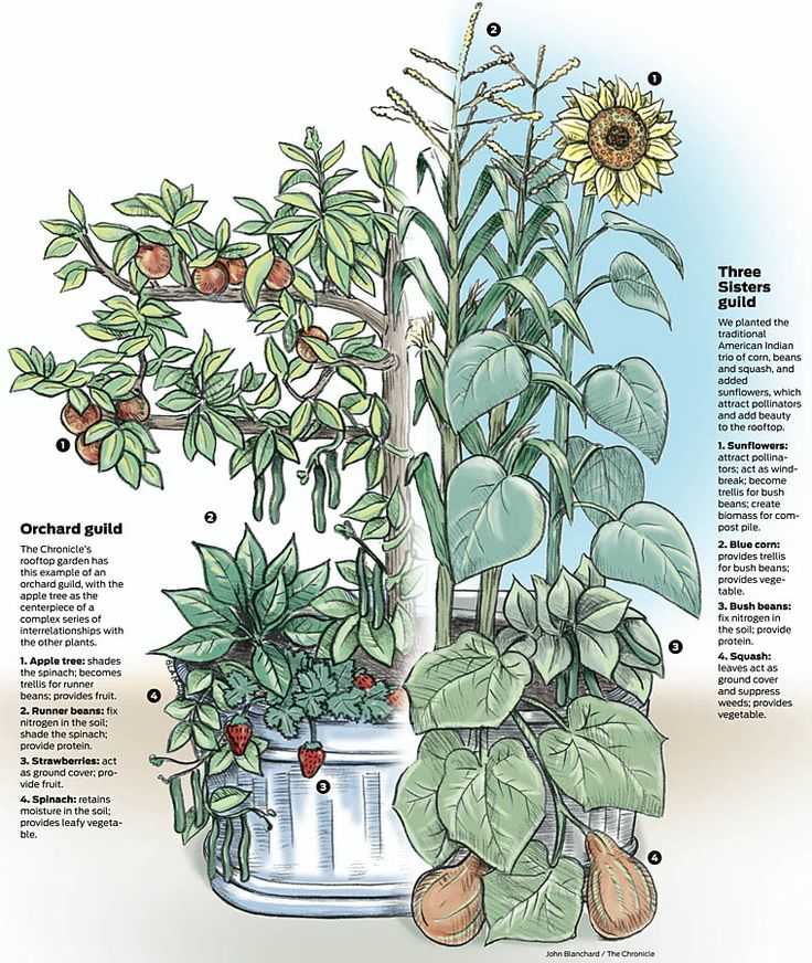 SF Chronicle has a rooftop garden, and better yet, they practice permaculture!