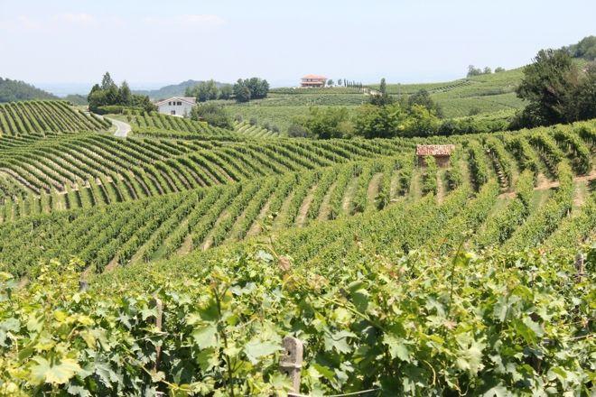 Le Colline del Basso Monferrato