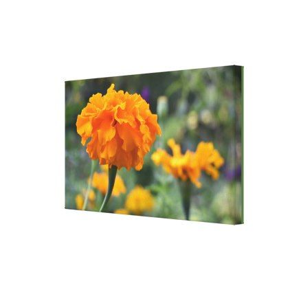 Marigold Orange Flower Nature Photography Garden Canvas Print - photography picture cyo special diy