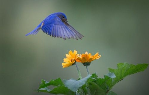 JUST HOVERING AROUND by Christopher Schlaf