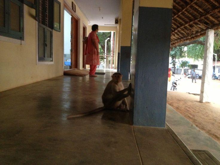 Meditating with the monkeys at Sri Ramana's Ashram in Tiruvanamalai, India.  http//www.InnerOuterYou.com