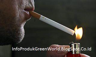 Ini Dia Beberapa Manfaat Rokok Bagi Kesehatan - Merokok menurunkan risiko obesitas. Nikotin yang terdapat dalam rokok merupakan senyawa yang dapat menekan nafsu makan. Info lebih lengkap dapat Anda baca disini http://infoprodukgreenworld.blogspot.co.id/2016/06/ini-dia-beberapa-manfaat-rokok-bagi.html