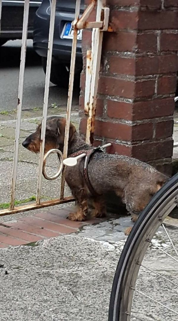 Ingenious idea for dog owners: A simple walk-in barrier