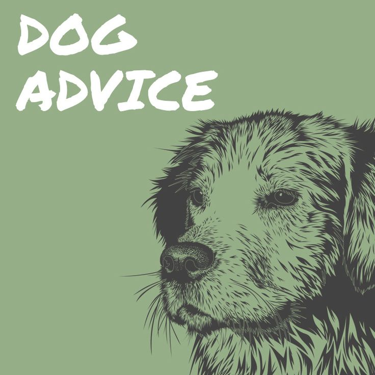 #Dogadvice: If your #dog appears to be uneasy meeting another #dog, don't insist he say hello.🐕