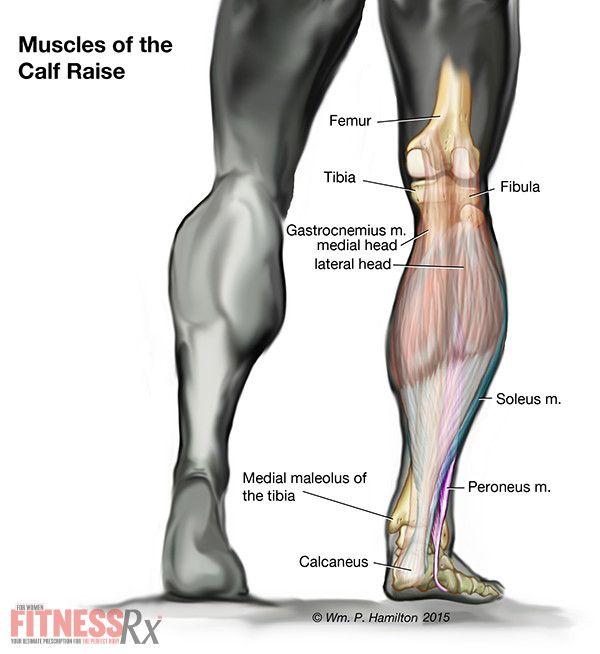 Standing Calf Raises - Shape and Sculpt Your Legs