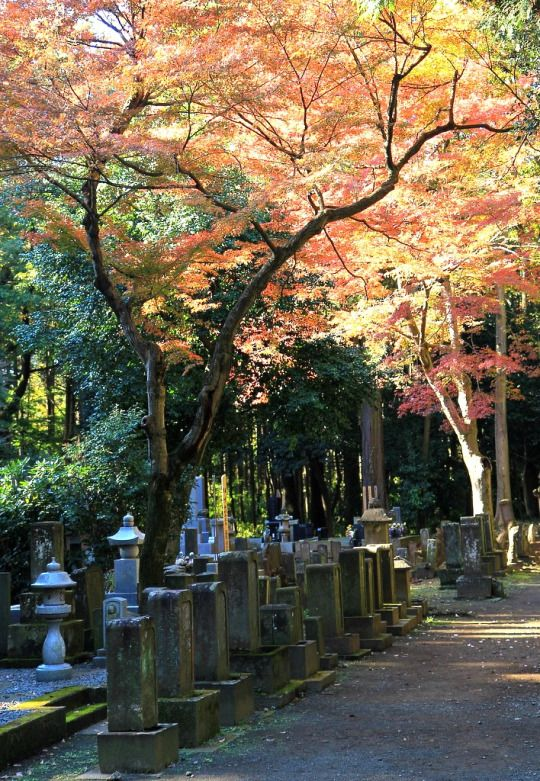 Autumn graveyard at Heirin-ji (平林寺), Saitama