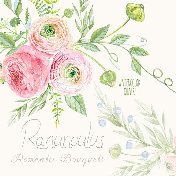 Ranunculus Bouquets Flowers Hand Drawn Clip Art Watercolor - digital flowers, DIY invites, scrapbooking, wedding invitations