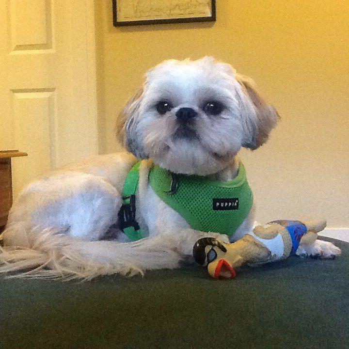 Benji Faze Rug Dog Breed: 3044 Best Cute Images On Pinterest