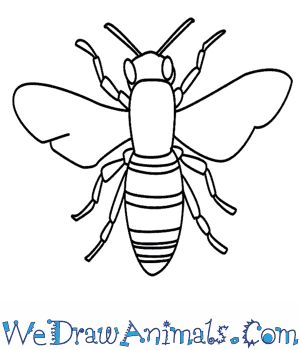 How to Draw a Bee in 11 Easy Steps #drawingtutorials #bee
