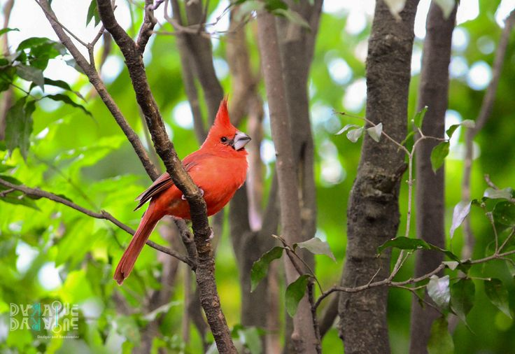 Bright bird on yonder dreary, leafless tree, Tuning that merry, lithesome throat to sing.