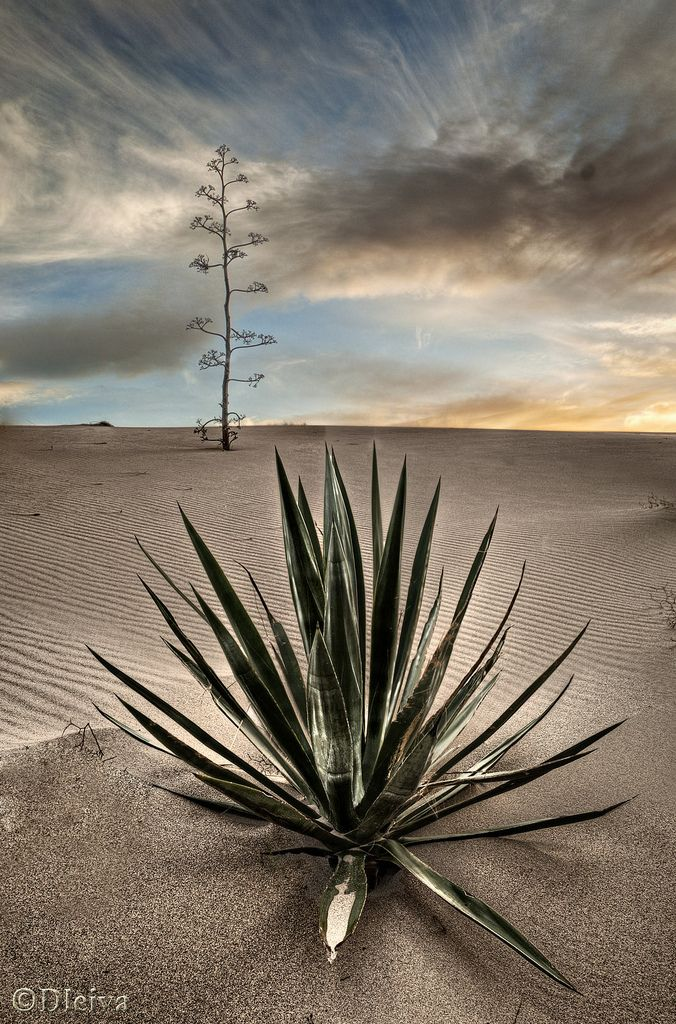 Monsul Dune, Cabo de Gata Natural Park, Almería, Spain