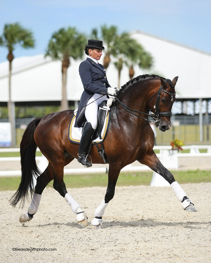 Yvonne Barteau of KYB Dressage riding the Holsteiner Stallion Raymeister, owned by Ginna Frantz of Grand Prix Equestrian in Maple Park, IL.    Find more info at http://www.kybdressage.com/
