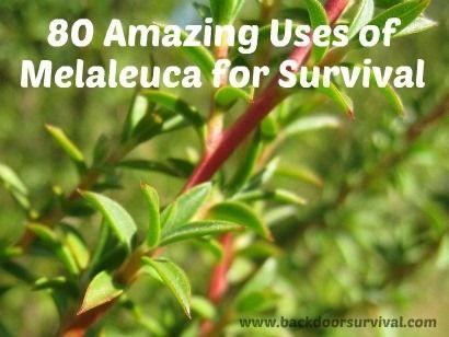 80 Amazing Uses of Melaleuca Oil for Survival - Backdoor Survival...(Tea Tree Oil..)