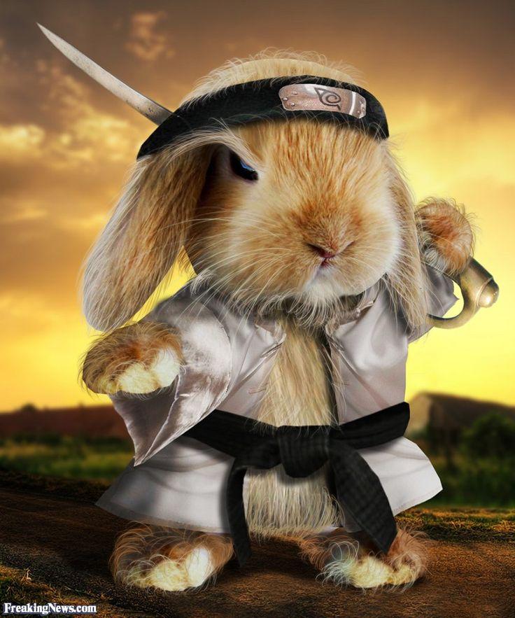 прикольные открытки кролики будет вся жизнь