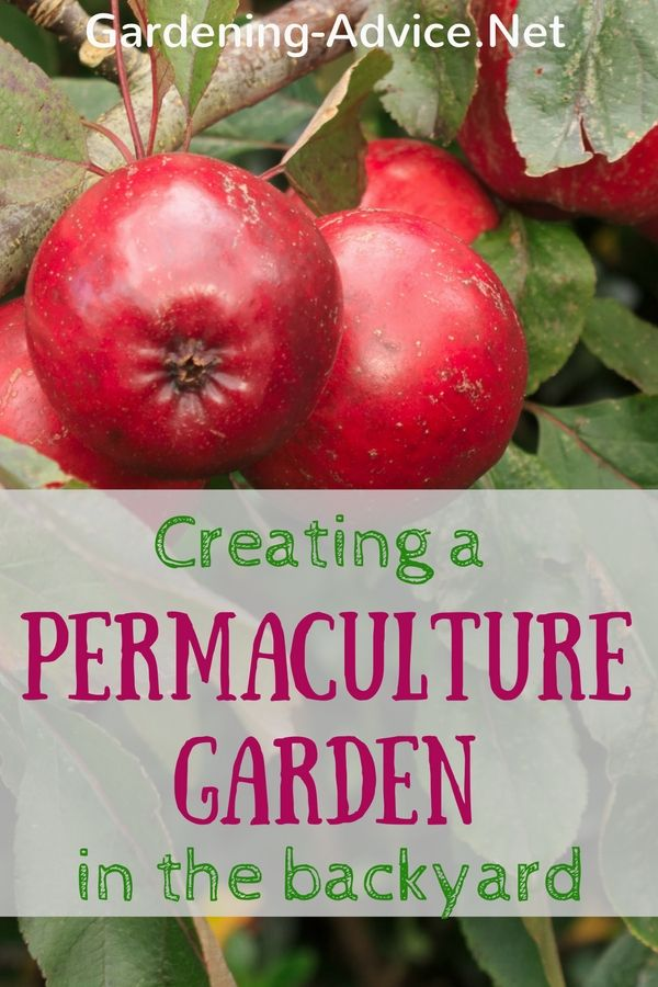 Turn your backyard into a permaculture garden oasis that produces benefits for nature and humans.