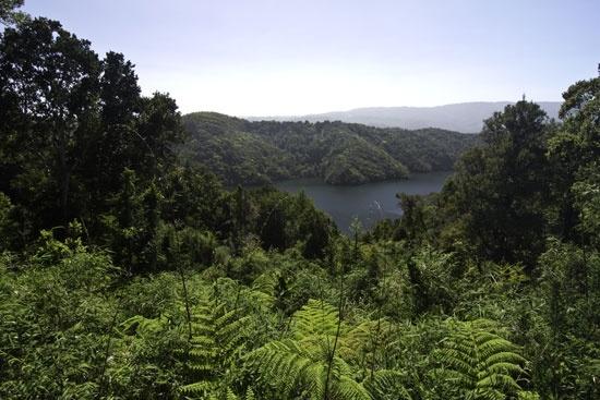 Otoño, la mejor época para ver copihues en la selva valdiviana: La costa al sur de Valdivia es un destino prácticamente ignorado por el turismo nacional, pero que ofrece una experiencia única: sumergirse en el bosque nativo, sentir la lluvia sobre la piel y admirar los copihues en su mejor momento. Foto: Erika Nortemann