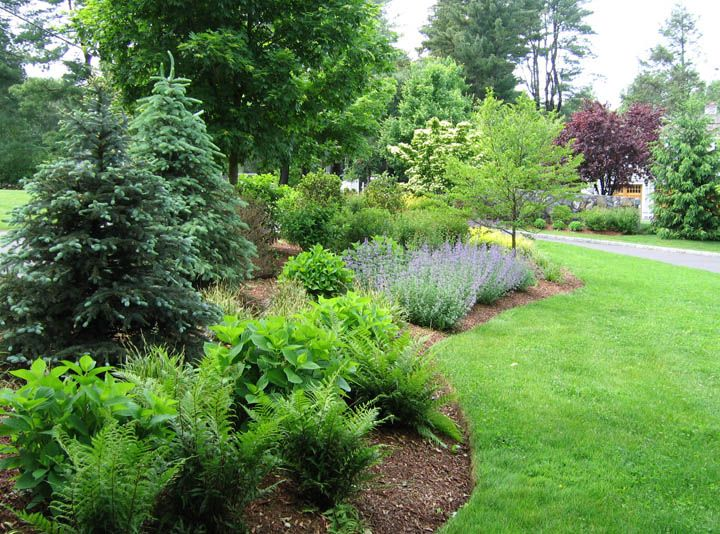 12 best ideas about privacy border on pinterest hedges for Garden design ideas with hedges