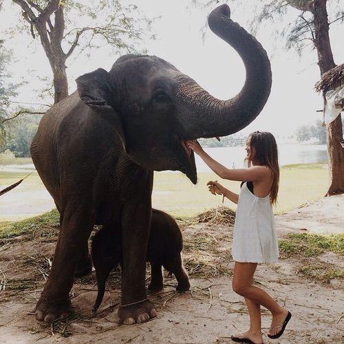 Image via We Heart It https://weheartit.com/entry/176814813 #bohemian #elephant #hippie #hipster #indie #wanderlust